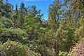 15-27-004, forest - panoramio.jpg