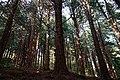171125 Kobe Municipal Forest Botanical Garden02s3.jpg