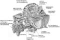 1963 A831 Chrysler engine side ru.png
