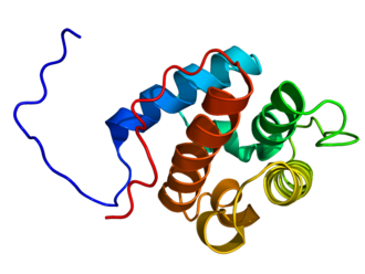 Calponin - CH domain from H.Sapiends Calponin 1. PDB 1wyp