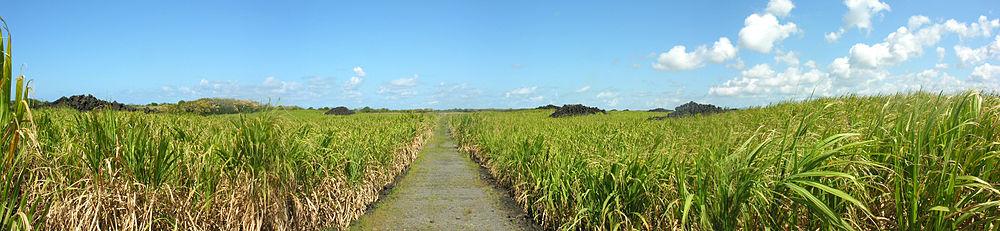 Mauritius Wikipedia