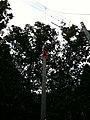 2010년 9월 경기도 남양주시 중앙119구조단 제16기 소방간부후보생 구조 훈련 사진 702 최광모 iPhone 3GS.jpg