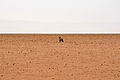 2010-09-26 10-12-21 Namibia Hardap Hammerstein.JPG