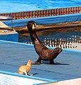 2012-09-09 Севастопольский дельфинарий (1).jpg