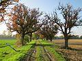 20121021Alte Landstrasse36.jpg