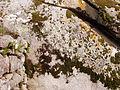 20121027 0757 Sintra 30.jpg