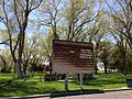 2014-05-02 13 55 22 Siberian Elm grove at the Elko City Park.JPG
