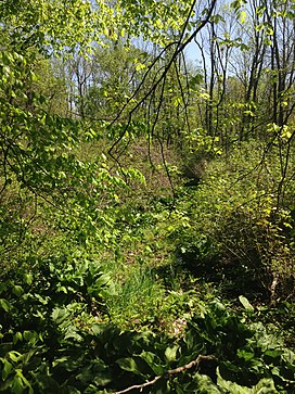 2014-05-11 11 12 05 View of a swampy area from the Doctors Creek Trail in Clayton Park, Upper Freehold Township, New Jersey.JPG