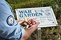 2017 War Garden (34566071531).jpg