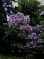 2019-05-14 - Аптекарский огород - Фото 6.jpg