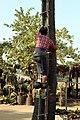 20200217 100400 Peasants producing palm sugar and palm liquor near Nyaung U Myanmar anagoria.JPG