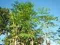 2191Grasslands, trees, paddy vegetable fields 49.jpg