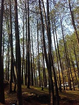 272trees of earth.jpg