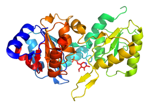 Protein Structure Initiative -  PDB structure 2p69, one of the protein structures solved by the New York SGX Research Center for Structural Genomics, a large scale PSI center. This human phosphatase is involved in vitamin B<sub>6</sub> (shown in stick diagram) metabolism .