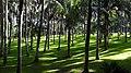38400 Punta Brava, Santa Cruz de Tenerife, Spain - panoramio (8).jpg