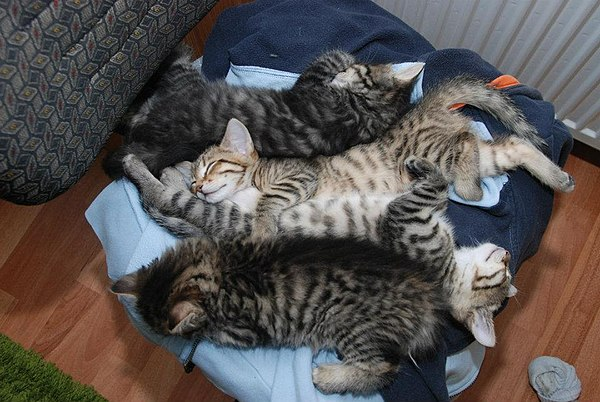 4 kitten laying next to each other.jpg