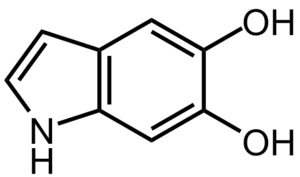 Neuromelanin - 5,6-dihydroxyindole, the monomer out of which neuromelanin polymers are formed.