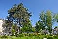 61-250-5029 Strusiv Pine DSC 9470.jpg