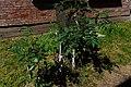 73-205-5021 пень коркового дерева (1).jpg