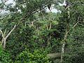 ACTS Canopy Walkway - Flickr - pellaea (4).jpg