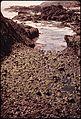 ALGAE IN ROCK BOUND WATER POOL - NARA - 543186.jpg