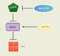 AML1-ETO effects on p53 pathway..png