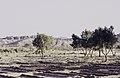 ASC Leiden - van Achterberg Collection - 16 - 01 - Un paysage aride avec des montagnes - Ahaggar, Algérie - Avril 1991.jpg