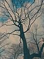 A Tree Grows In Hartford (190633311).jpeg