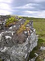 A boulder with lichen, moss and ferns - geograph.org.uk - 1372993.jpg