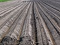 A close-up view over the long lines in the soil of the fields; The Netherlands, spring 2012.jpg