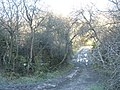 A frozen, muddy, track near Oerddwr cottage - geograph.org.uk - 643068.jpg