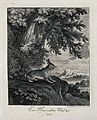 A hare standing on a rock outside a forest overlooking the c Wellcome V0021065EL.jpg