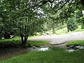 A peaceful scene near Tarr Steps - geograph.org.uk - 926199.jpg