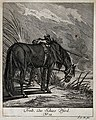 A shooting-horse is standing with its head tied to its hoofs Wellcome V0021146EL.jpg