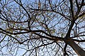 A tree of Rebirth.jpg