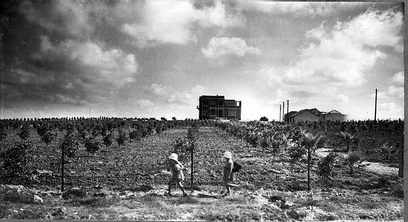 File:A young orchard on Moshav Bnei Brak. 1928 (id.15608574).jpg