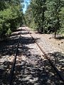 Abandoned Railroad makes a nice walking path - panoramio.jpg