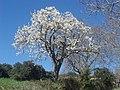 Acedo Primavera - panoramio.jpg