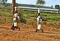 Africa0703-0316a - Flickr - Dave Proffer.jpg