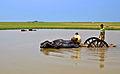 Agriculture of Bangladesh 9.jpg