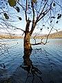 Alberi di lago.jpg