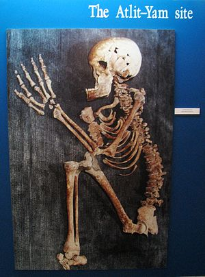 Atlit Yam - Human skeleton discovered at Atlit Yam