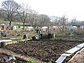 Allotments in Diggle - geograph.org.uk - 377739.jpg