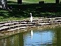 Almancil community gardens, 26 August 2015 (3).JPG