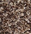Aloe menyharthii - seeds (11023709075).jpg