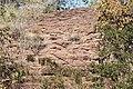 Alto Araguaia - State of Mato Grosso, Brazil - panoramio (347).jpg