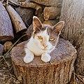An adopted kitten.jpg