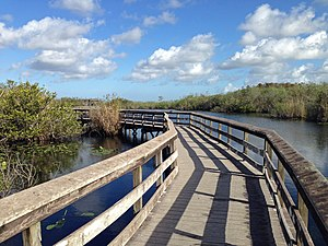 South Florida - Image: Anhinga Trail boardwalk
