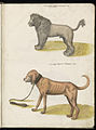 Animal drawings collected by Felix Platter, p2 - (79).jpg