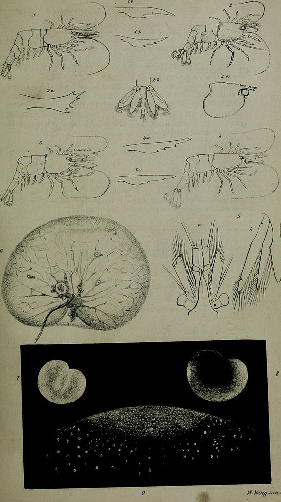 Annals And Magazine Of Natural History Series